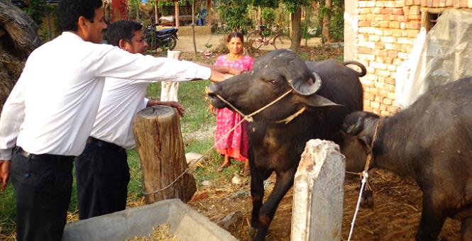 सरकारको 'एक स्थानीय तह, एक पशु प्राविधिक' कार्यक्रम