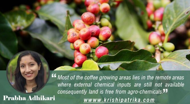 Organic Coffee production in Nepal: Status and Opportunities