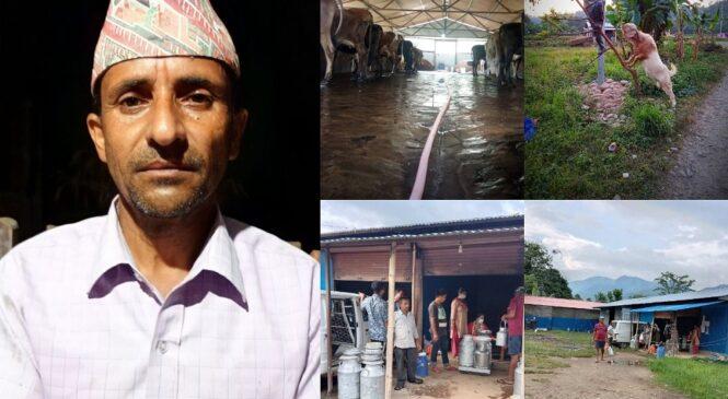 सिन्धुलीका एक गाई किसानका कारण सिंगो गाउँ नै बदलियो (सफलताको कथा)